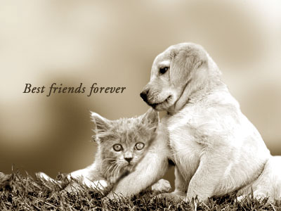 friends forever wallpapers with quotes. friends forever wallpaper.