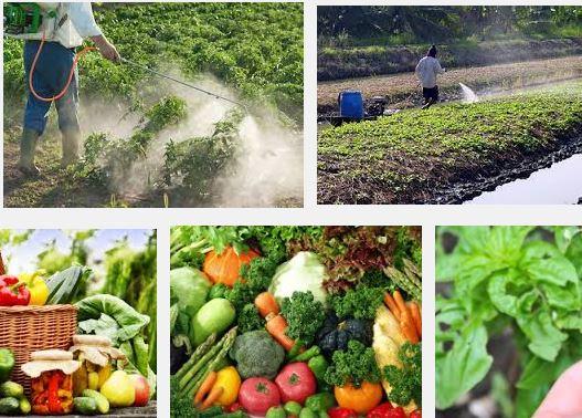 Pesticide in Vegetables
