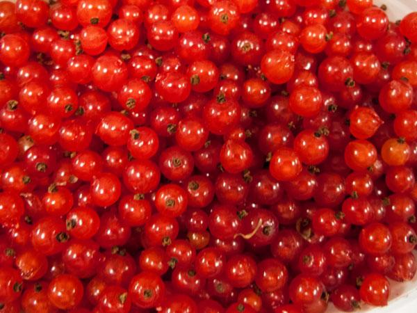 röda vinbär, red currants