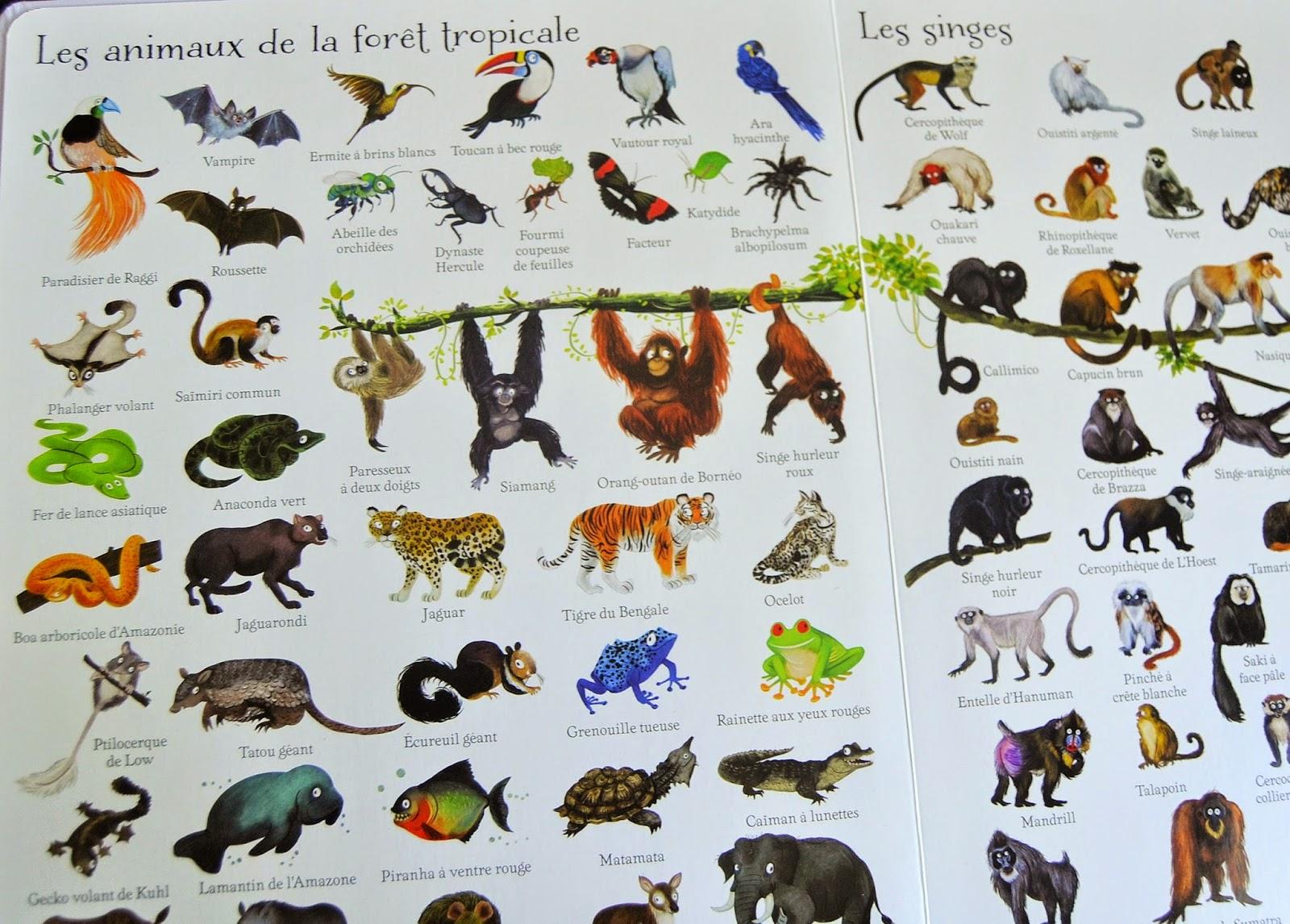 Célèbre Les Mercredis de Julie: 1000 animaux en images JA68
