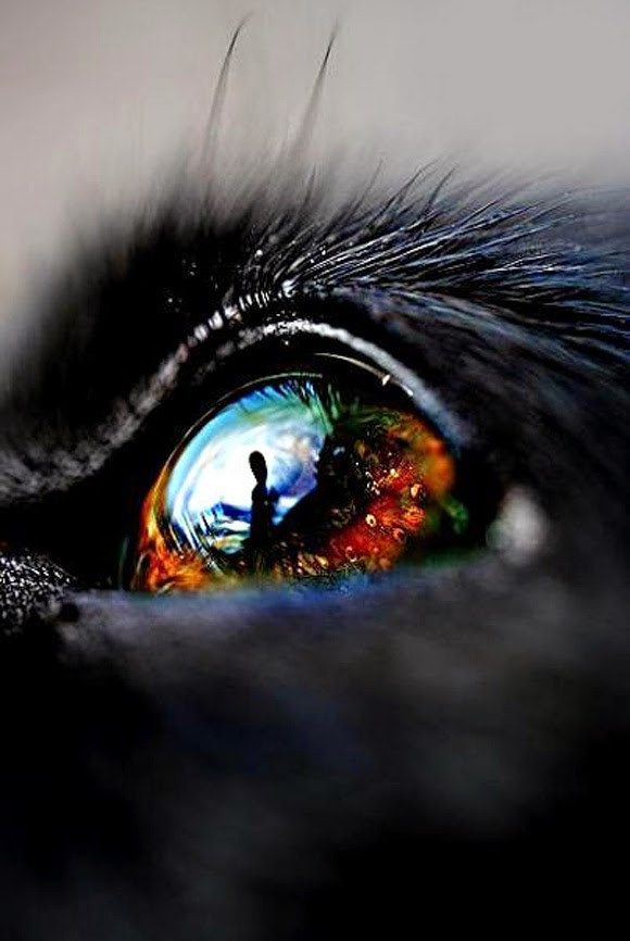 http://500px.com/photo/4621868/dog-eye-by-linn-photography