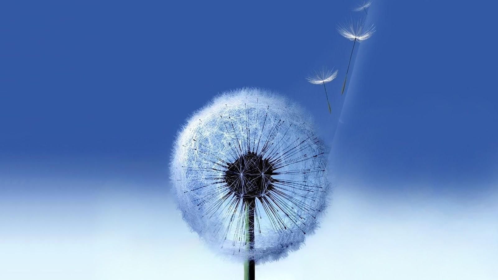 http://4.bp.blogspot.com/-yveteY4F5XU/UEhYz2TzjuI/AAAAAAAAF3c/39G7yWbeH3g/s1600/samsung-galaxy-flower-1920x1080.jpg