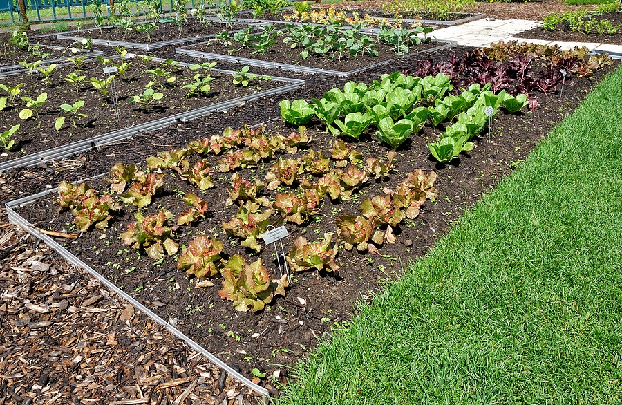 Planting in the Vegetable Garden