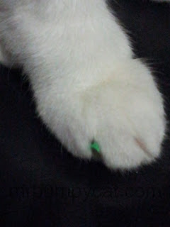 Image: white cat's paw with a small piece of green foam mat caught on the claw.