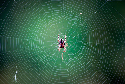 How to Photographs a Spider's Web - Tips for Photographing Spider Webs