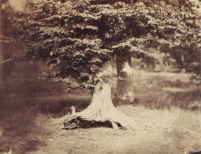 "The Beech Tree, by Gustave Le Gray (circa 1856). In October 1999, Sotheby's sold a Le Gray albumen print ""Beech Tree, Fontainebleau"" for £419,500, which -at that time- was a world record for the most expensive single photograph ever sold at auction to an anonymous buyer. Later that day -at the same auction- an albumen print of ""Grande Vague, Sète"" (""The Big Wave at Sète,"" ""The Great Wave, Sète"") also by Le Gray was sold for a new world record price of £507,500 or $840,370 to the same anonymous buyer who was later revealed to be Sheik Saud Al-Thani of Qatar. The record stood until May 2003 when Al-Thani purchased a daguerreotype by Joseph-Philibert Girault de Prangey for £565,250 or $922,488."