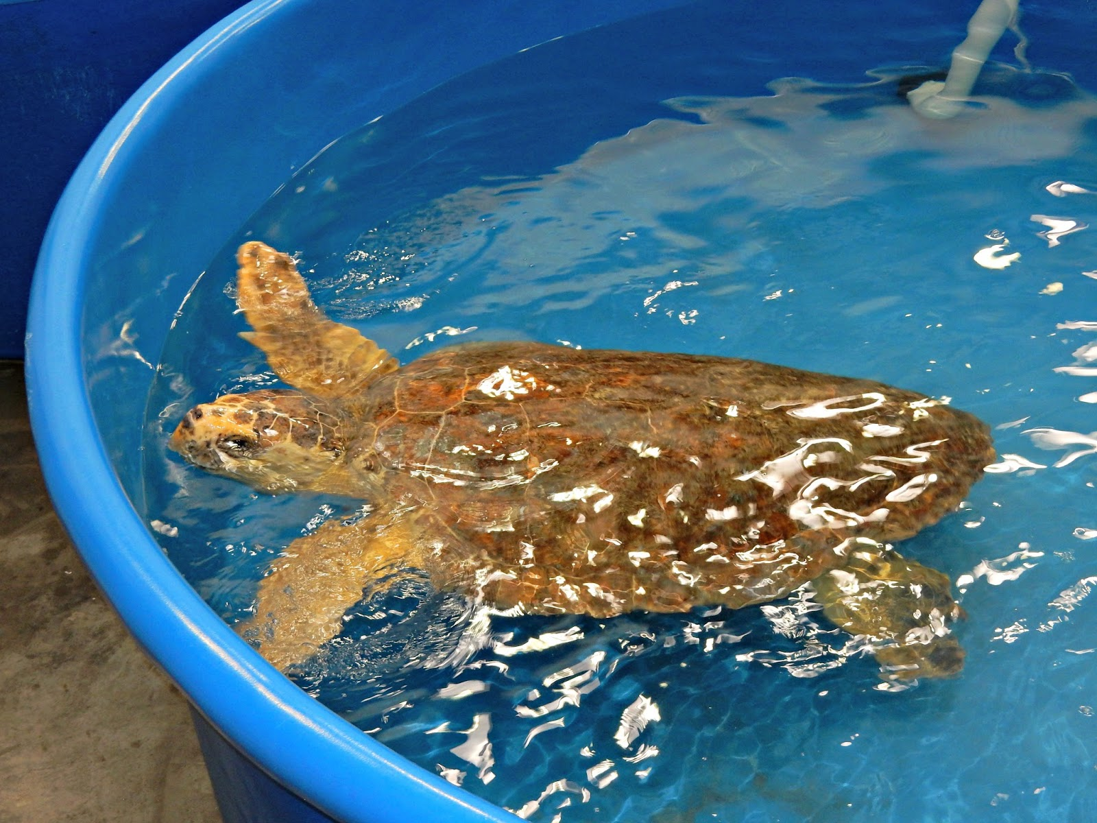 Two Bears Farm and the Three Cubs: Karen Beasley Sea Turtle Hospital