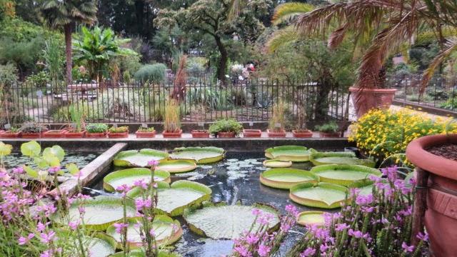 hortibus fleurs d 39 automne au jardin botanique de padoue. Black Bedroom Furniture Sets. Home Design Ideas