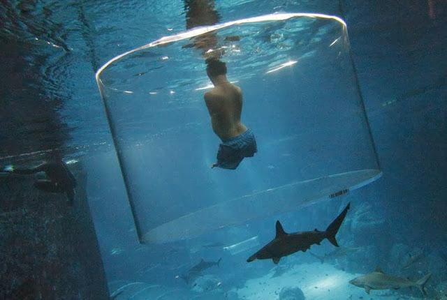 Родившийся без всех четырех конечностей Ник Вуйчич плавает с акулами в океанариуме Сингапура