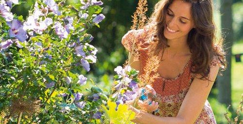 plantas toxicas jardim:Perigo no Jardim