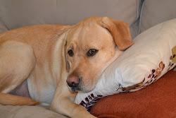 Duke Dog
