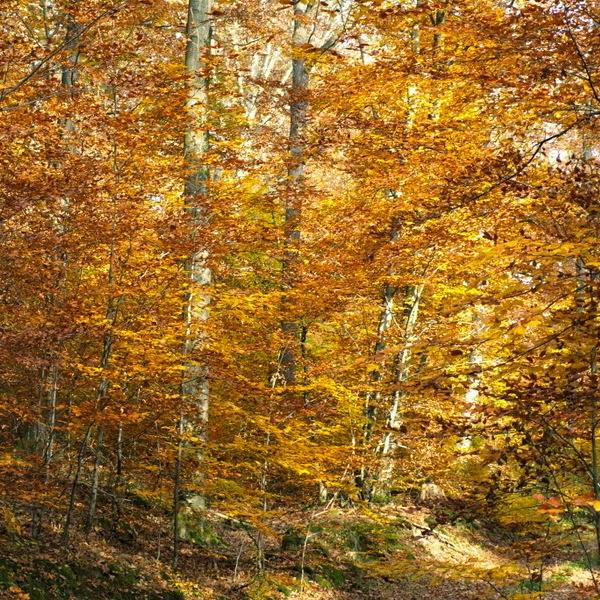siebaecktgern, Fotografie, Herbst