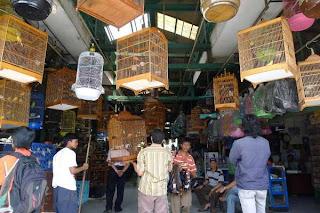 Info harga burung di PB Kupang Surabaya