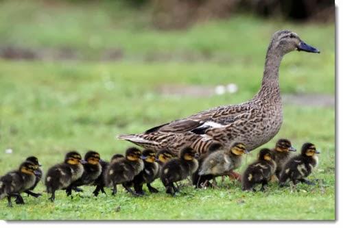 A Femme d'Un Certain Age: Ducks, Dynasties and Decorum