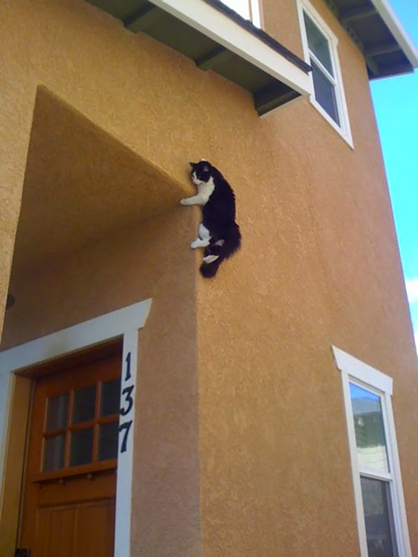 cats who mastered the art of hid and seek-11