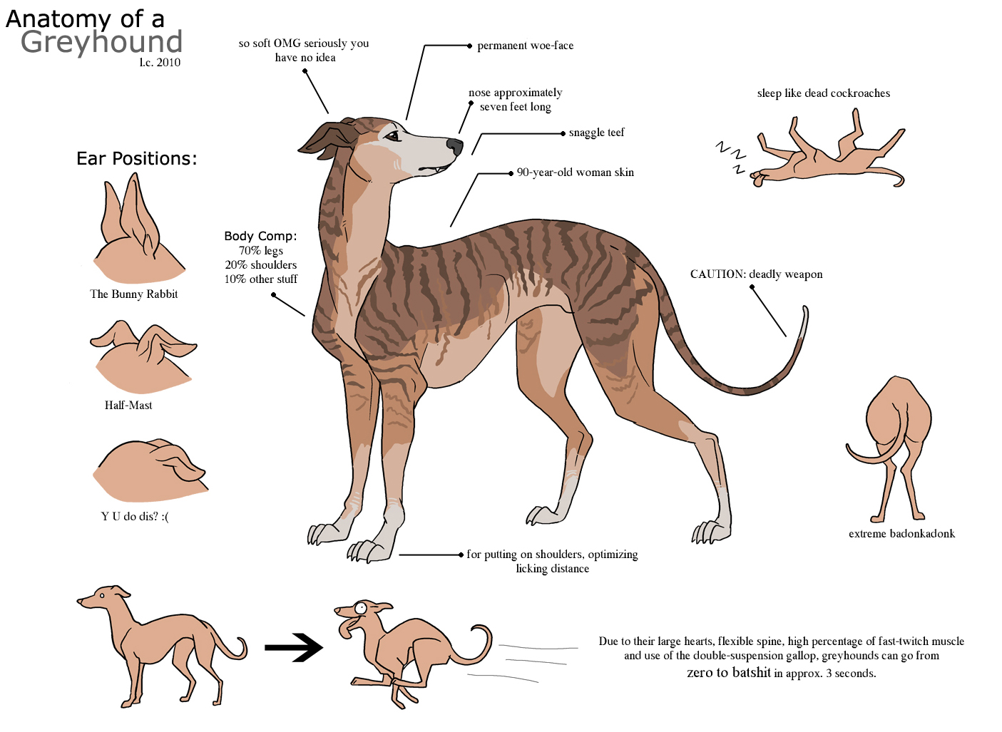 A Humorous Look At The Greyhound Anatomy Manual Guide