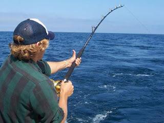 السمك والفراولة Fishing