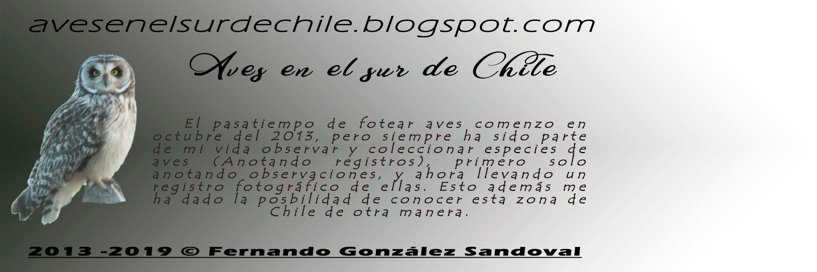 Aves del Sur de Chile: Puerto Montt y alrededores