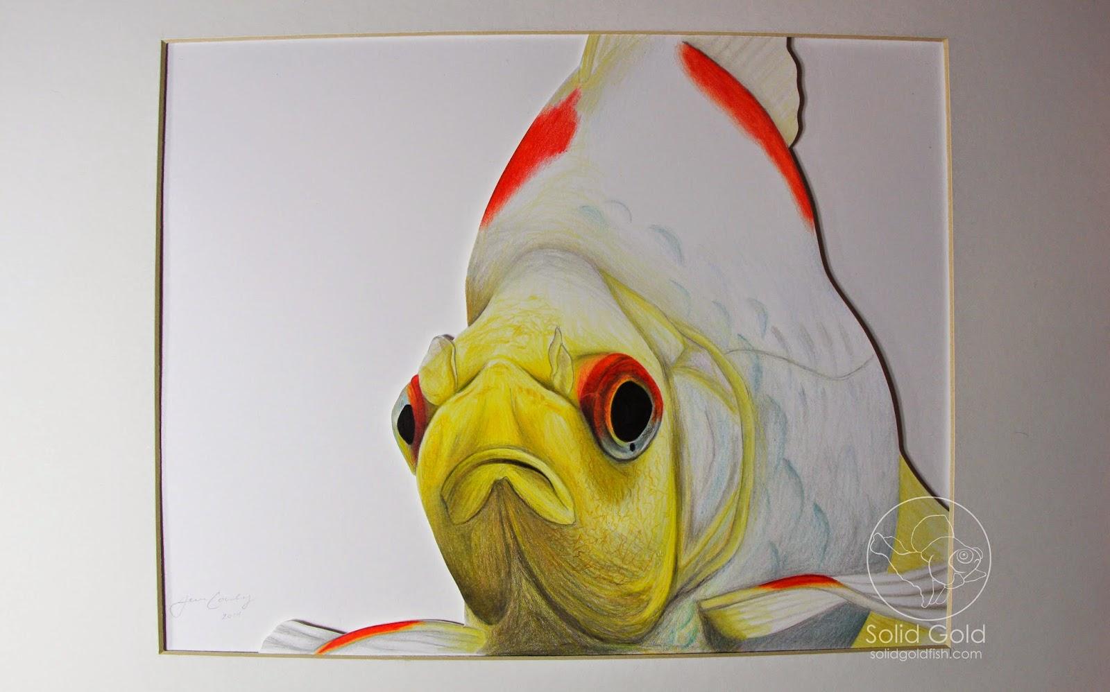 Solid gold sketchbook solid gold aquatics for Solid gold fish
