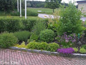 En örtagård