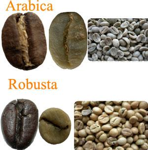 Resultado de imagen de imagen cafe arabica