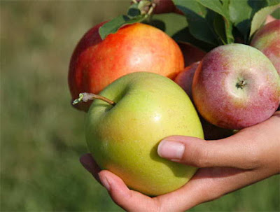 Cách nhận biết táo Trung Quốc