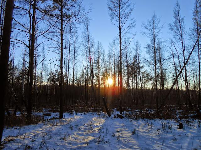 Закат солнца в Челябинском городском бору