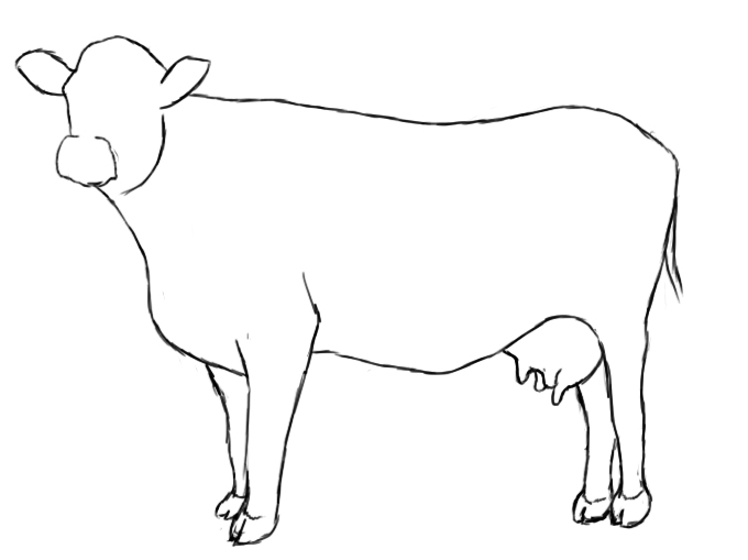 Line Drawing Cow Face : How to draw a cow central