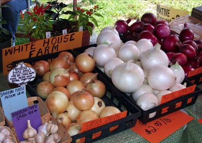 Saturday Easthampton Farmers Market