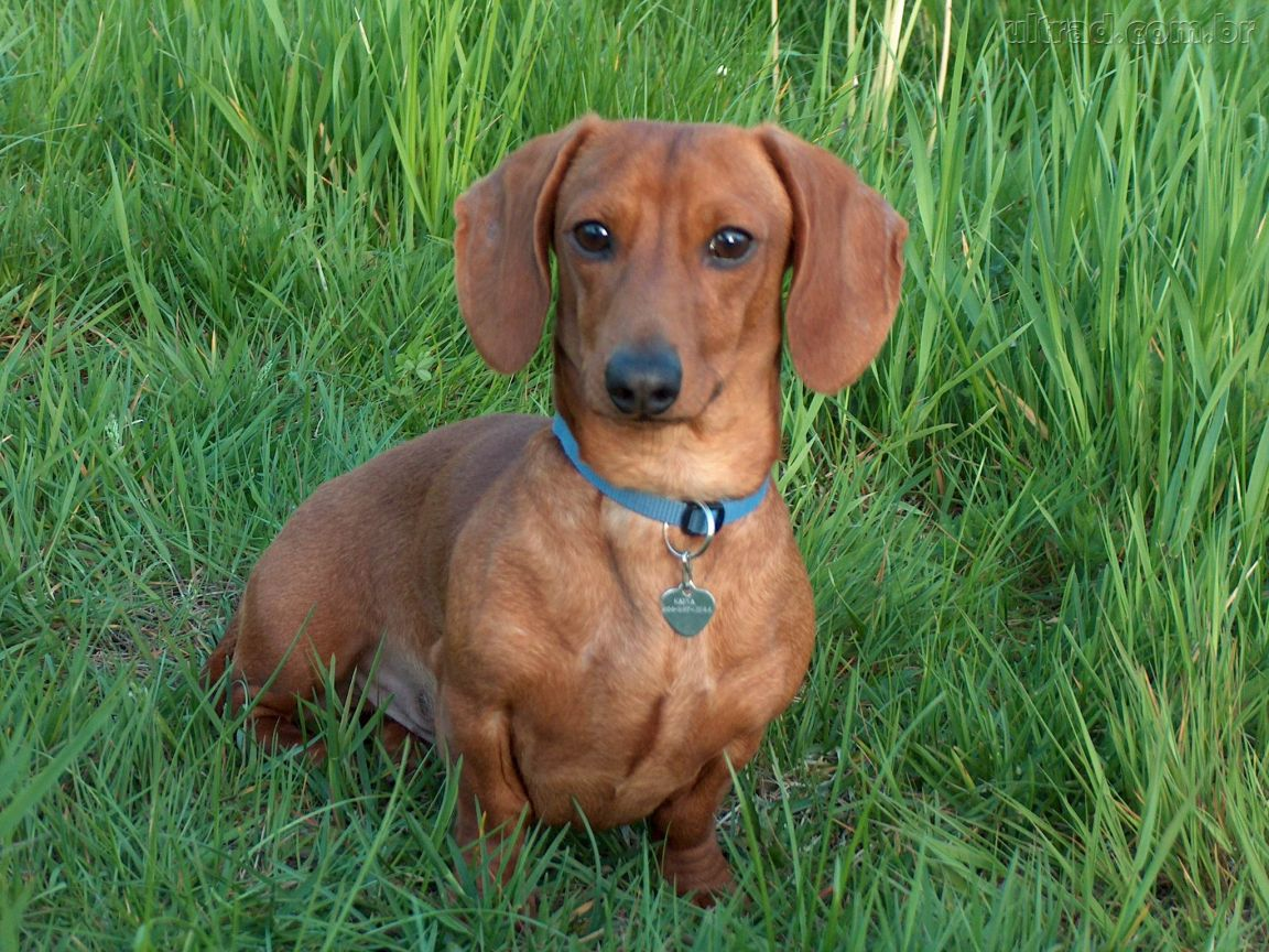 dogs on dog breeds picture