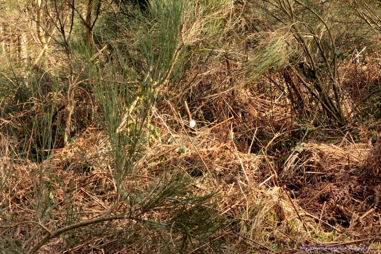 Image Bois De Cerf : . Le blog de l'Abeille Pat: Bois de cerf 2015, une du fiston