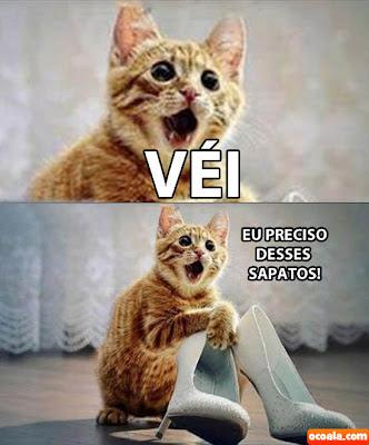 véi na boa eu preciso desses sapatos gato, véi na boa gatinho sapato, véi na boa cat, véi na boa gatinhos, véi na boa catitos, vei na boua, meme da net, meme engraçado, pic animals