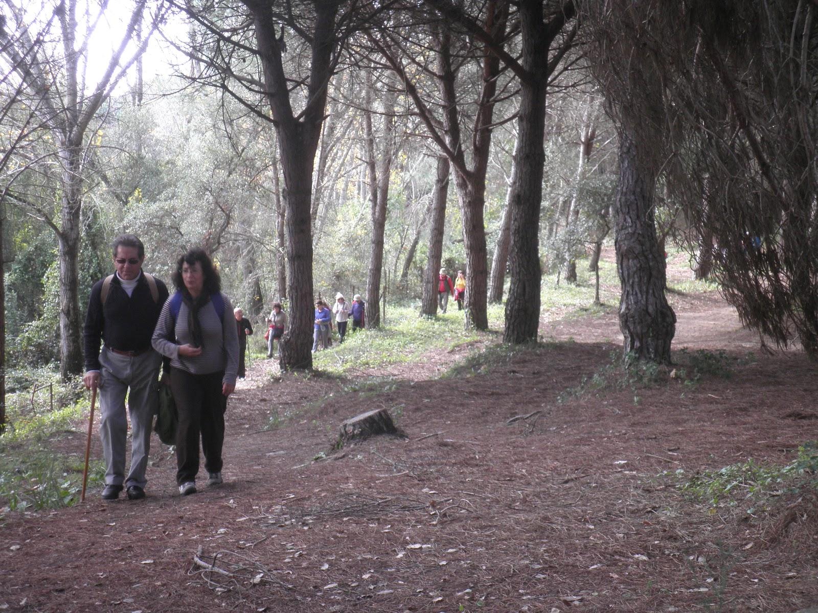 Asociaci n deportivo cultural rote a en ruta arroyo de for Asociacion pinar jardin