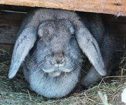 Dette er mi kanin Tussi.