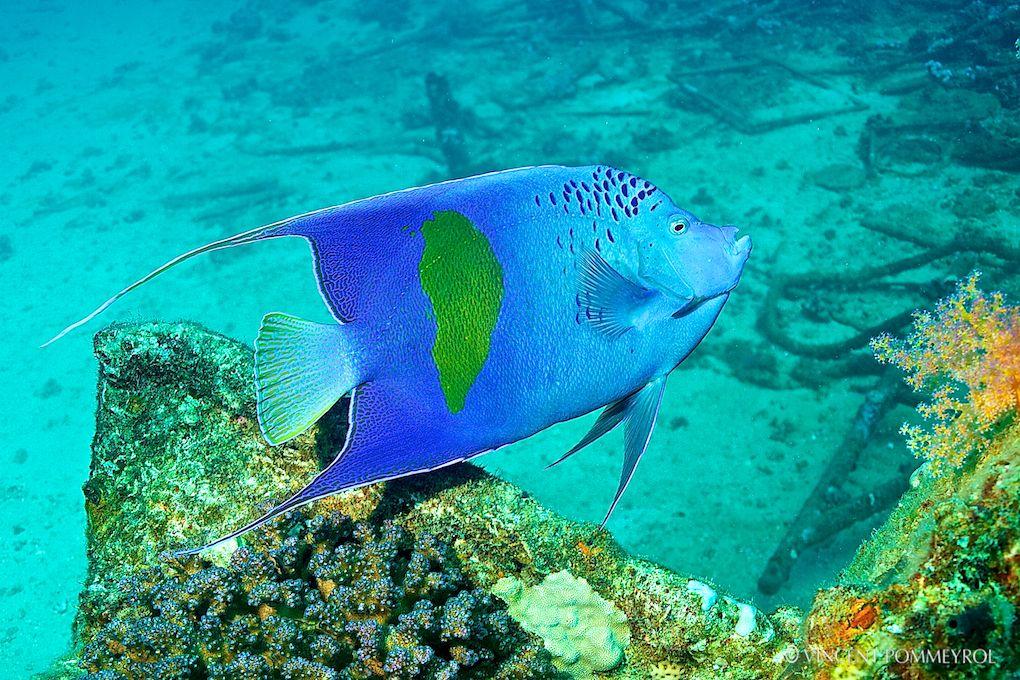 16. Underwater Photography