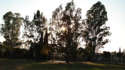 Los árboles plantados por Sandra.