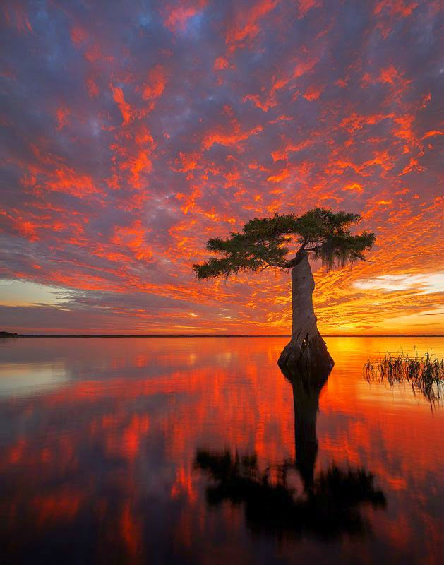 Blue Cypress Lake, Indian River County-Florida