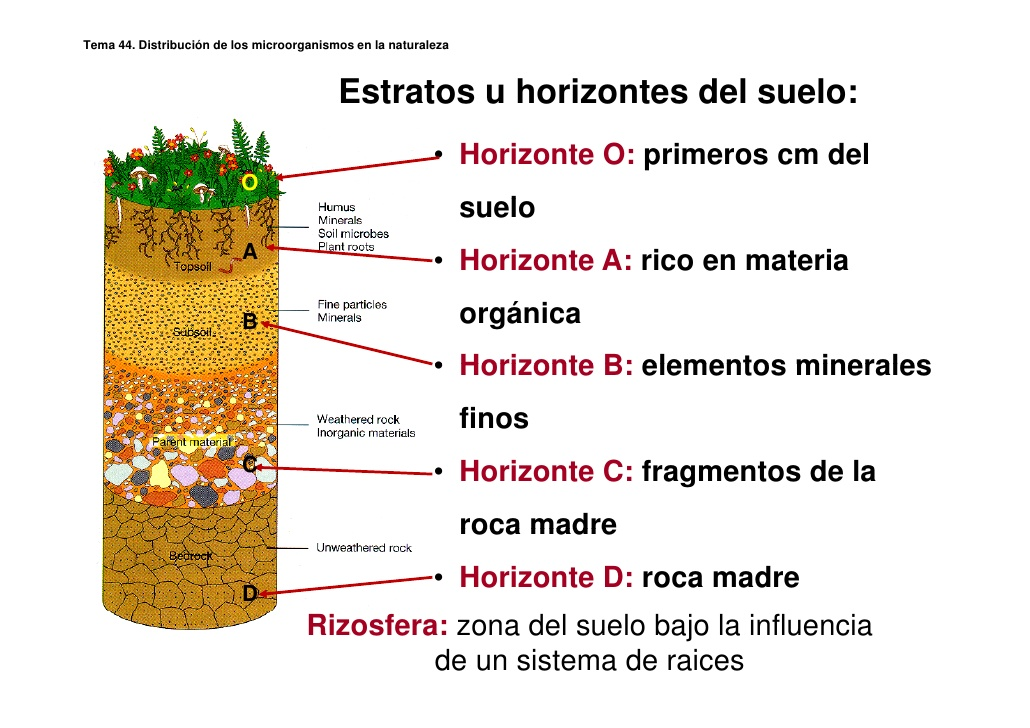 Geolog a semana iv for Que elementos conforman el suelo