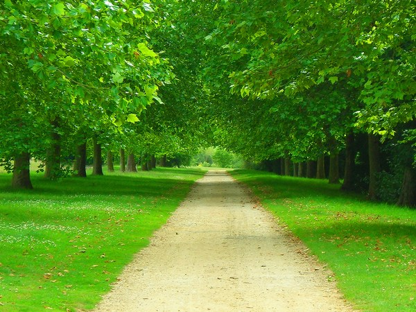 Awesome Green Forest Beautiful Path Images