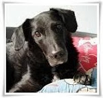 R.I.P. Lieber Shaggy  <br> 27.07.00 - 05.04.13<br> Du fehlst uns so sehr