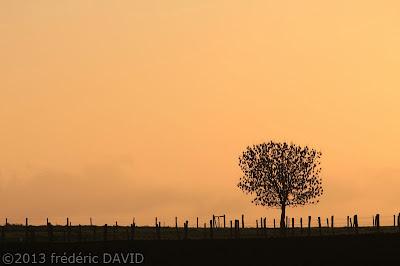 silhouettes oiseaux campagne arbre contre-jour contraste lever soleil Seine-et-Marne