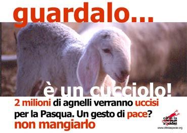 Men in pasta no all 39 agnello for Marchi di pasta da non mangiare