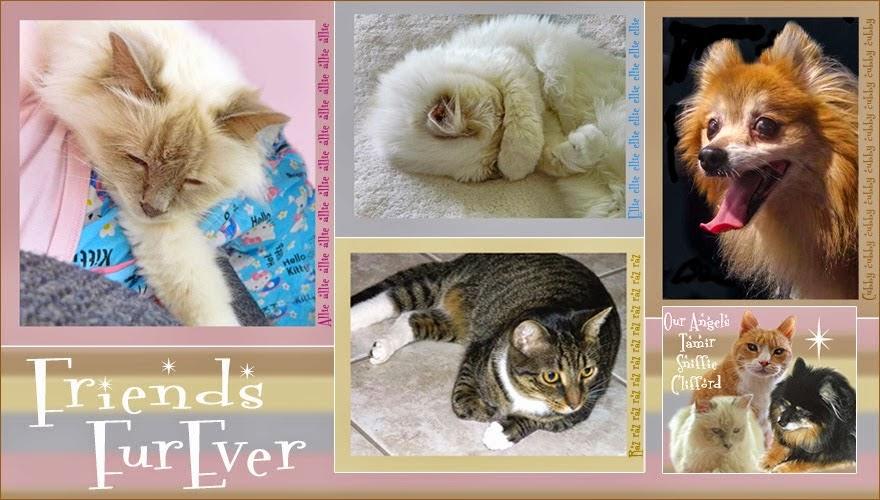 http://friendsfurevercatblog.blogspot.fr/