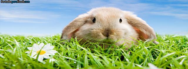 un conejo en la grama