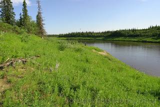 Останки деревянной баржи – такие махины таскали груза по Шапке в советское время, по большой вод, река Шапкинае