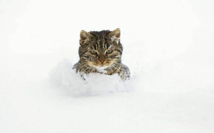 Коты в снегу, фото 2