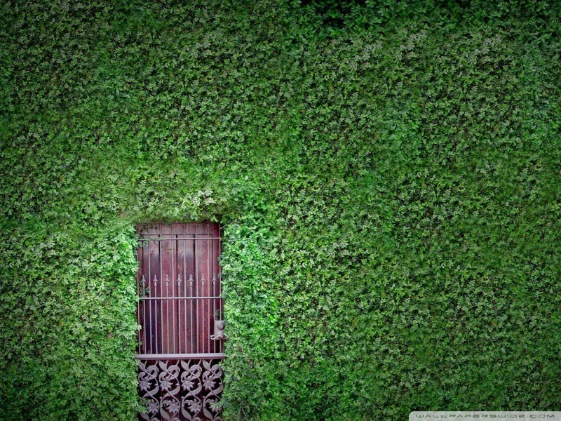 green wall 25 Best Wallpapers For HTC Nexus 9