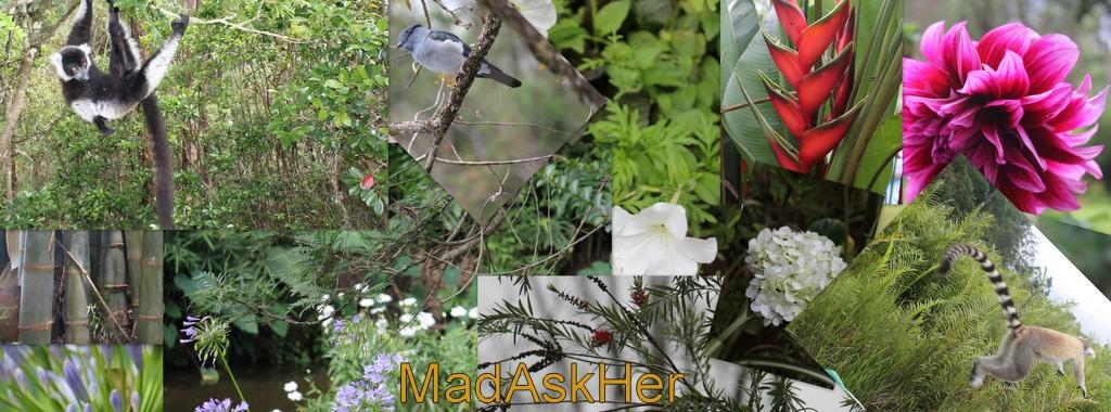 MadAskHer