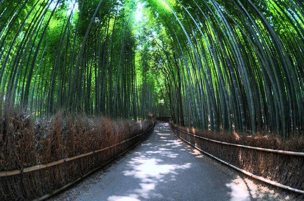 5 Jalan Kecil Terunik di Dunia: Jalan Bambu, Jepang