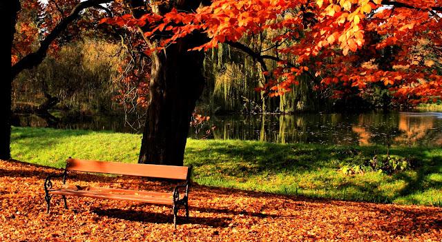 лавочка под деревом осень